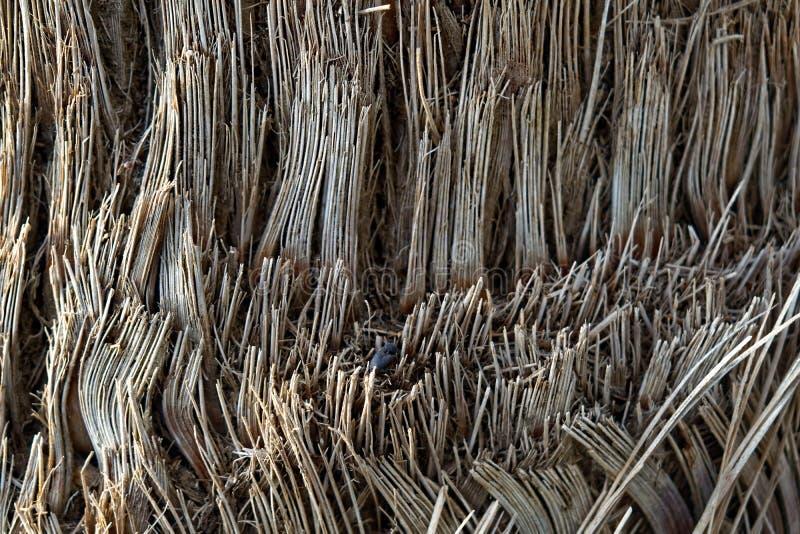 Textur för slut för trädstam övre med ett svart ägg royaltyfri fotografi