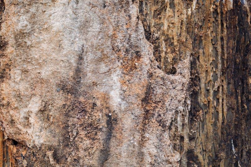 Textur för sten för naturlig sandfärg beige sömlös fotografering för bildbyråer
