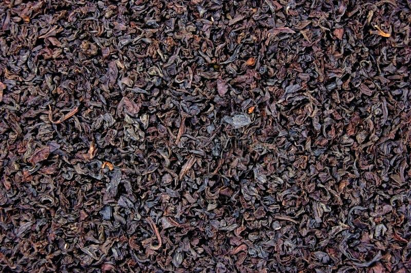 textur för tea för leaf för bakgrundsblack detaljerad royaltyfria bilder