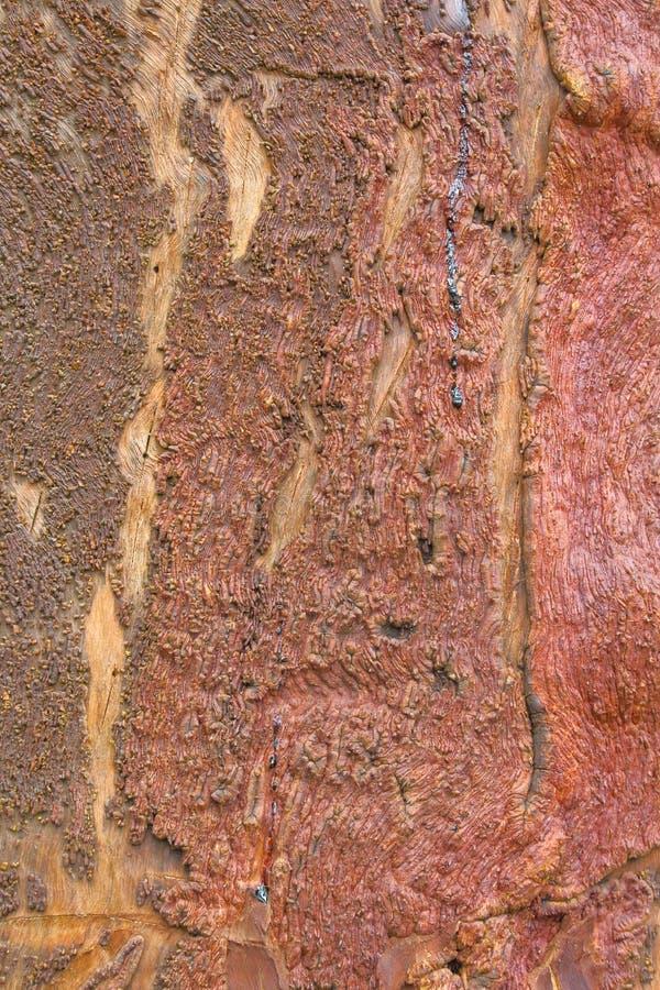 Textur för trädskäll med härliga naturliga collors royaltyfria foton