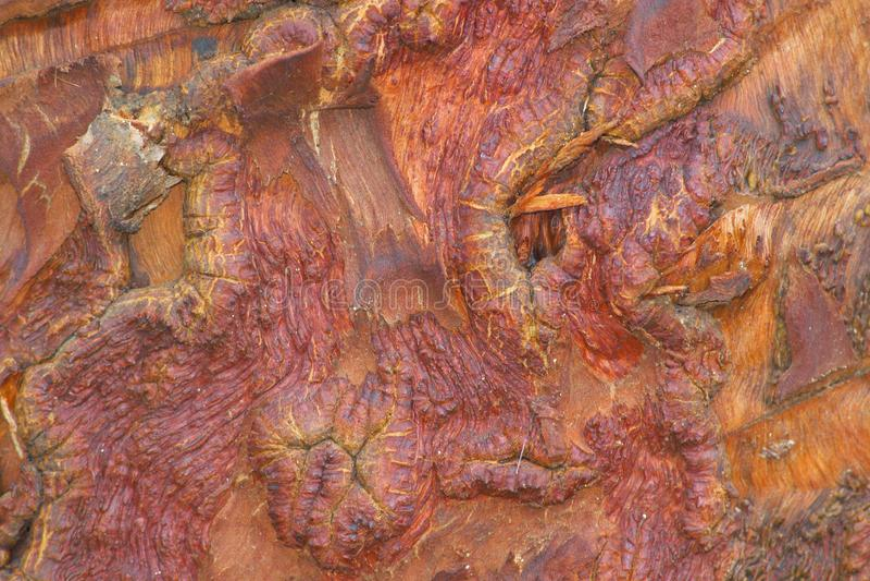Textur för trädskäll med härliga naturliga collors arkivbild