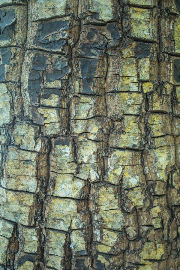 Textur för trädskäll med laven som bakgrunden arkivfoton
