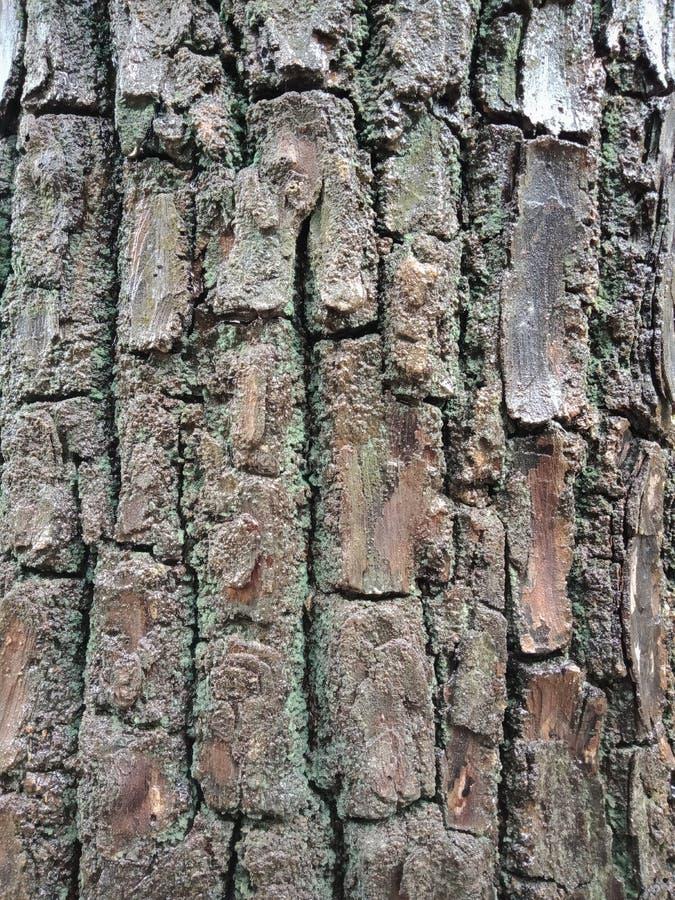 Textur för trädskäll, texturerad bakgrundstapet royaltyfri foto