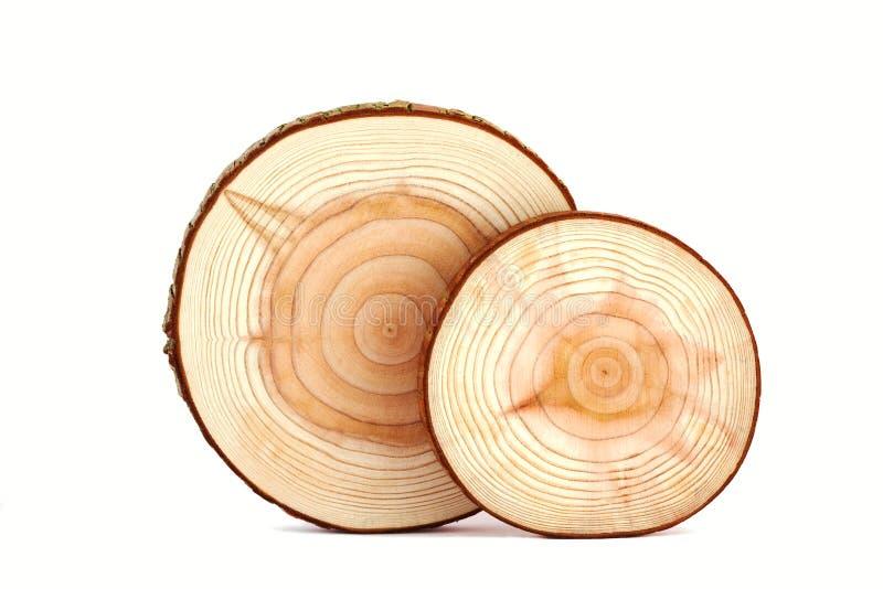 Textur för Treecirklar. royaltyfria foton