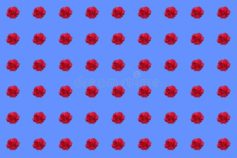 Textur från röda nejlikor på den blåa bakgrunden royaltyfri fotografi