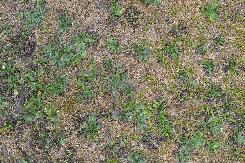 Textur 9915 - torrt gräs royaltyfria bilder