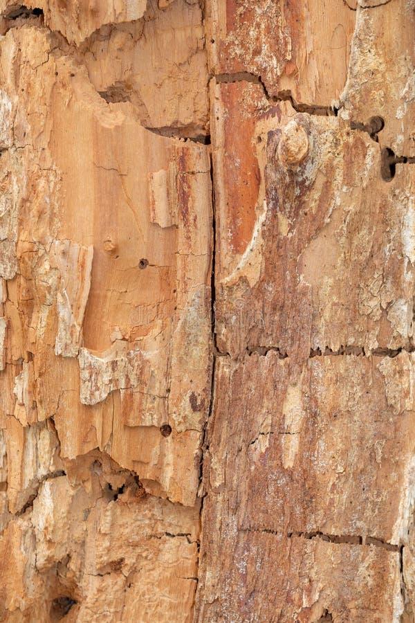 Textura ?spera velha da madeira fotografia de stock royalty free