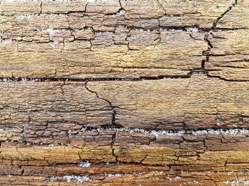 Textura úmida da superfície do tronco com quebras para o fundo fotos de stock royalty free