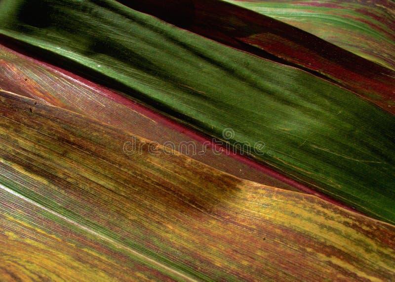 Textura ..... 2 imagen de archivo