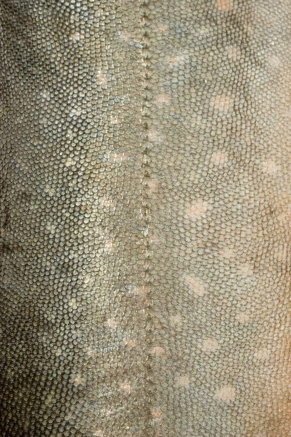 Textura #3 das escalas de peixes imagens de stock royalty free