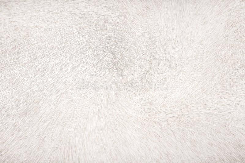 Textura abstracta de la vaca de los modelos blancos o grises de la piel para el fondo fotografía de archivo