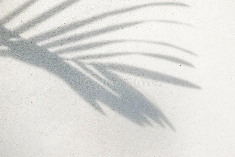 Textura abstracta del fondo de las hojas de palma de las sombras en un muro de cemento fotos de archivo