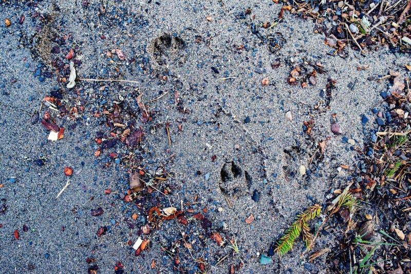 A textura abstrata da areia na costa do lago dispersou o colo foto de stock