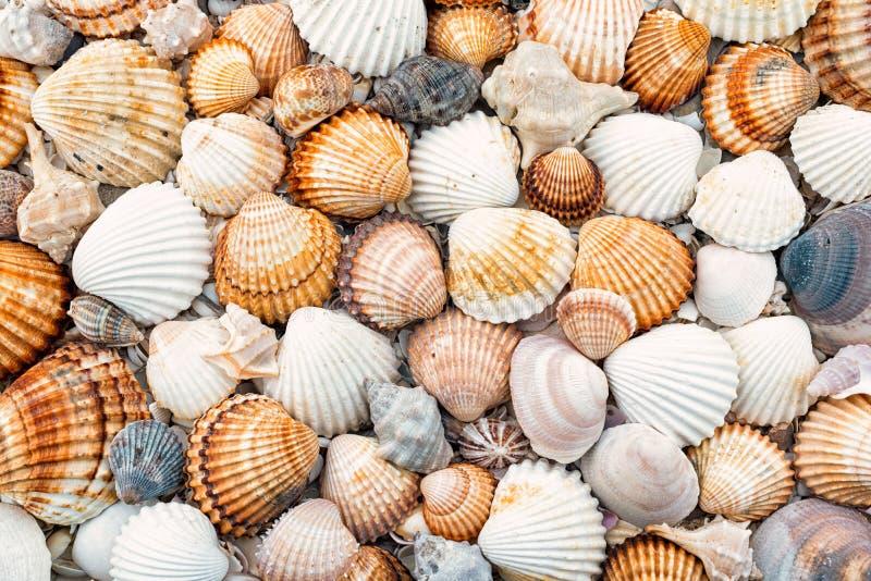 Textura abstrata dos shell imagem de stock royalty free
