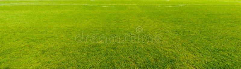 Textura agradável da grama verde fotografia de stock