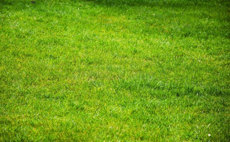 Textura agradable de la hierba verde fotos de archivo