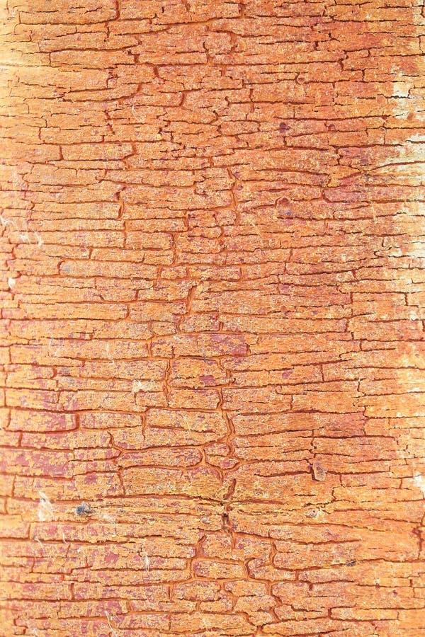Download Textura Altamente Detallada De La Corteza De árbol Imagen de archivo - Imagen de cubo, grunge: 41921049