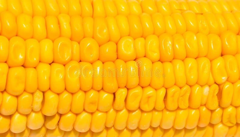 Textura amarilla del maíz en el fondo blanco Primer amarillo dulce de la semilla del maíz imágenes de archivo libres de regalías