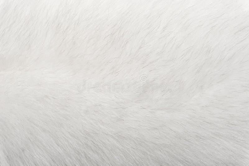 Textura animal natural del fondo de la piel primer polar ártico blanco de las lanas del zorro imagen de archivo