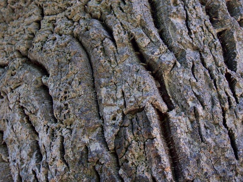 Textura antiga rachada de madeira de cortiça fotografia de stock