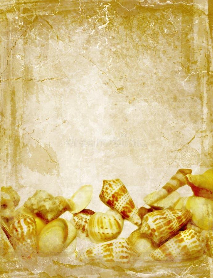 Textura antigua del Seashell fotografía de archivo libre de regalías