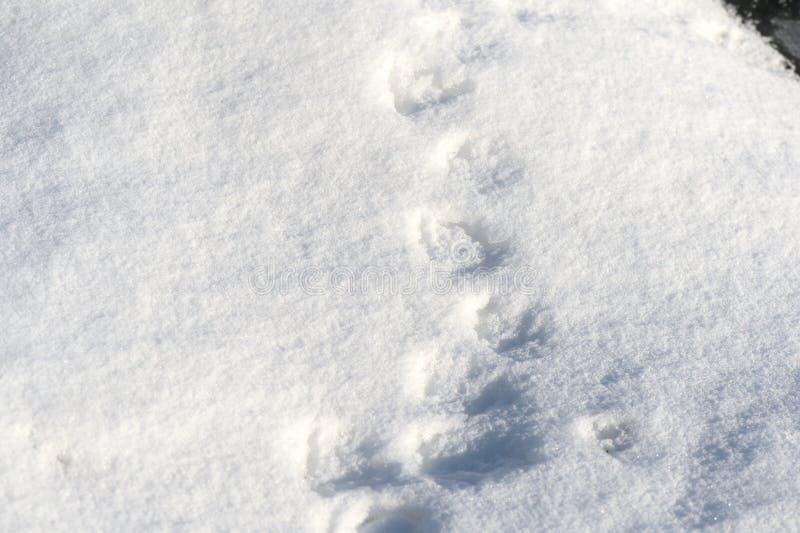 Textura blanca de la nieve en un día soleado Fondo del invierno fotografía de archivo