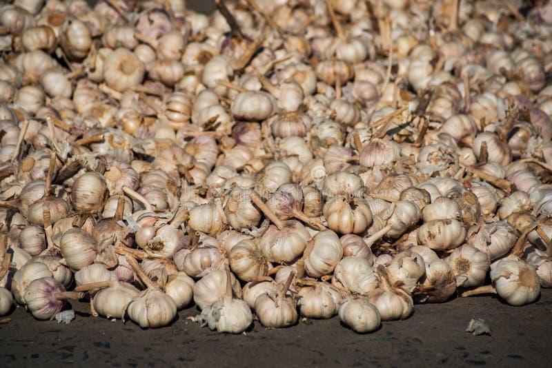 Textura blanca de la pila del ajo Ajo fresco en la foto del primer de la tabla del mercado Imagen sana de la especia de la comida fotografía de archivo
