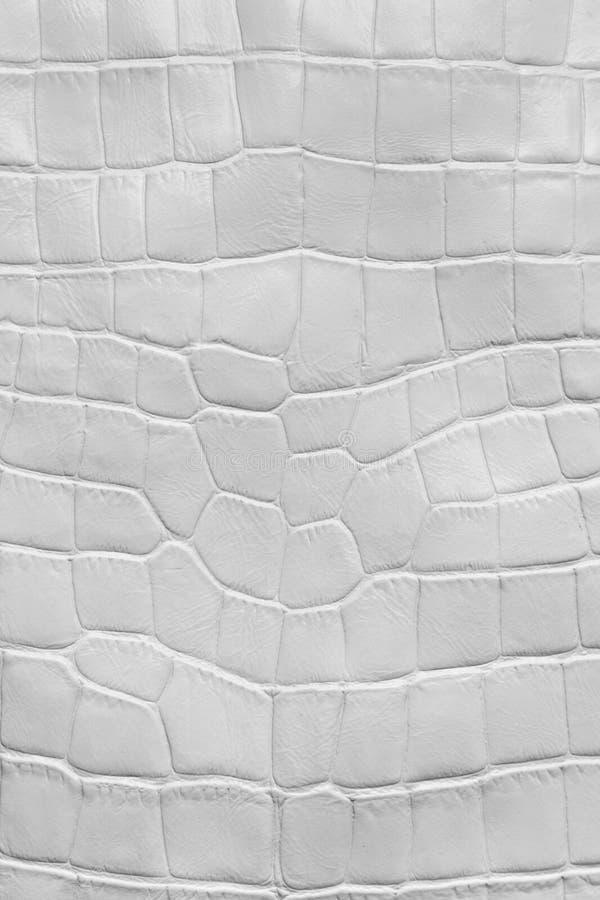 Textura branca do couro do crocodilo imagem de stock