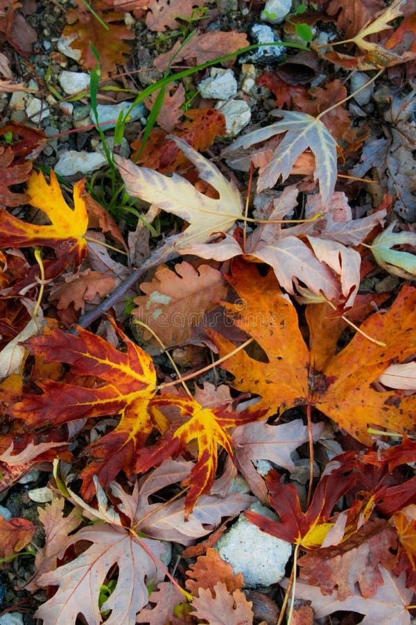 Textura caída bordo do outono das folhas fotografia de stock