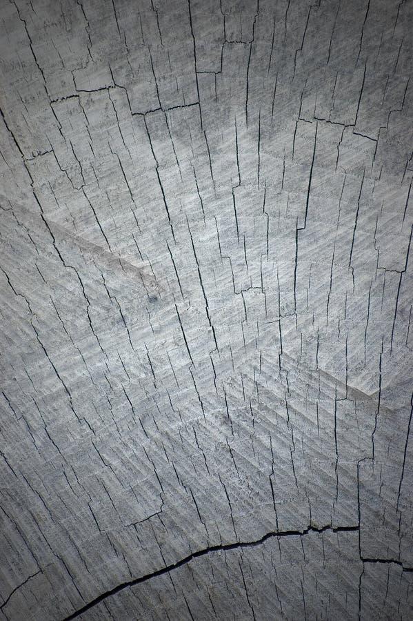 Textura cinzenta natural de Vignetted do corte do coto da árvore imagem de stock royalty free
