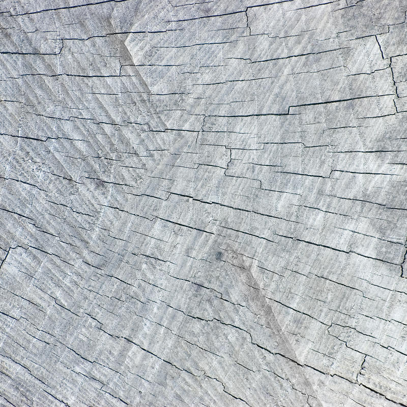 Textura cinzenta resistida natural do corte do coto da árvore foto de stock royalty free