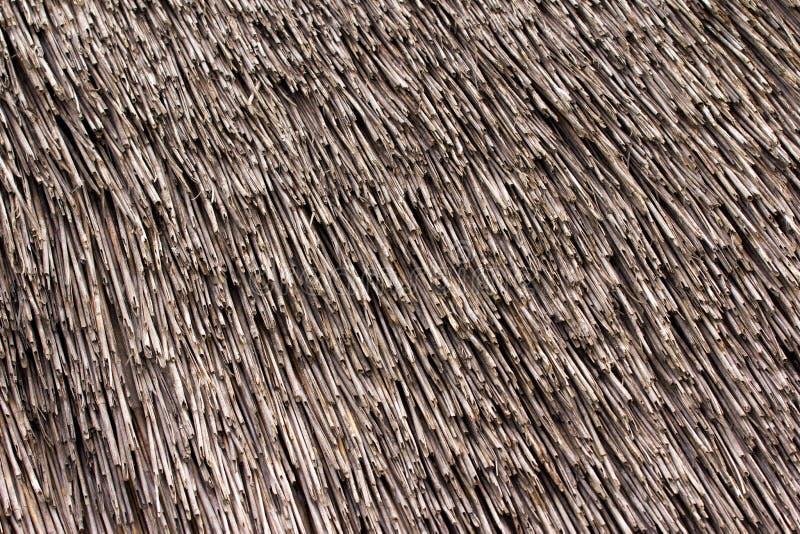 Textura cobrida com sapê do telhado. fotografia de stock royalty free