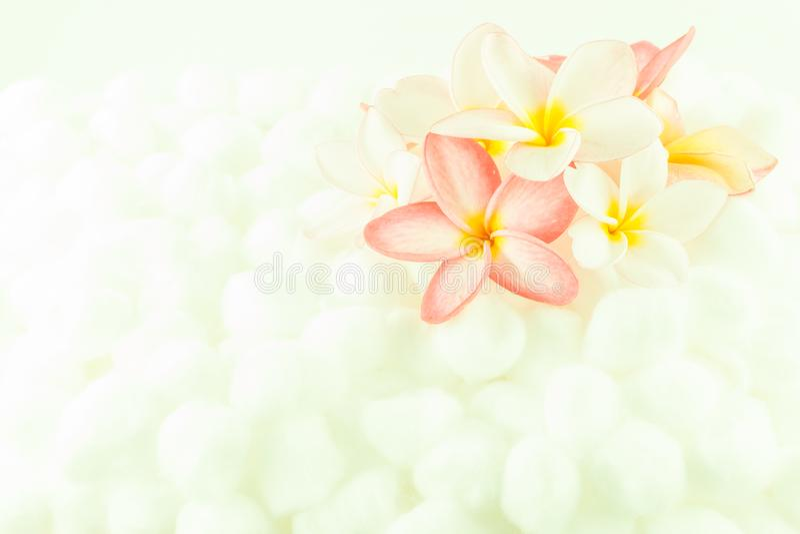 Textura colorida del papel pintado de la flor del Plumeria foto de archivo