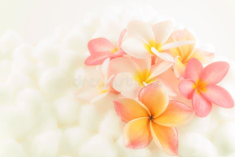 Textura colorida del papel pintado de la flor del Plumeria imagen de archivo