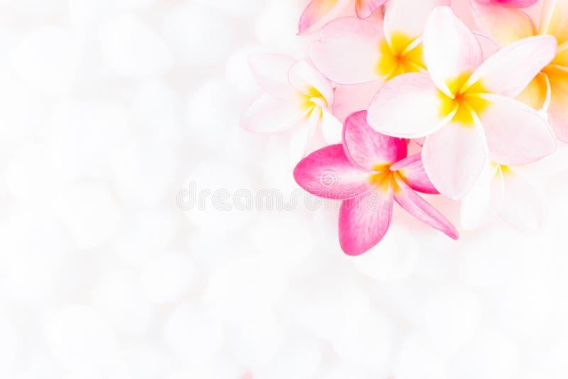 Textura colorida del papel pintado de la flor del Plumeria fotografía de archivo