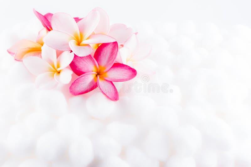 Textura colorida del papel pintado de la flor del Plumeria fotografía de archivo libre de regalías