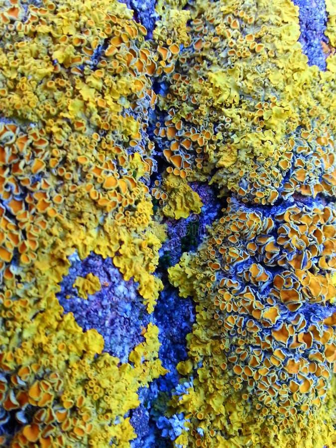 Textura colorida do musgo imagens de stock royalty free
