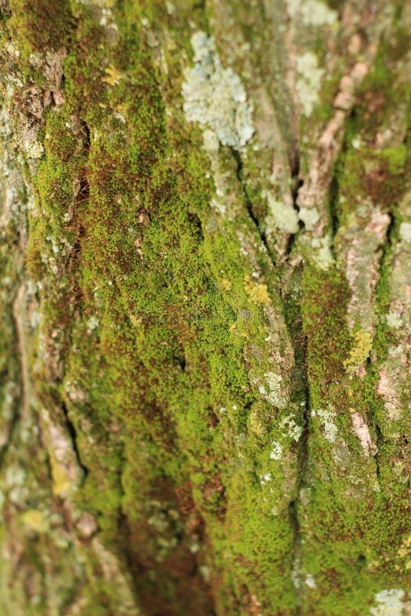 Textura colorida do musgo em um tronco de árvore fotografia de stock