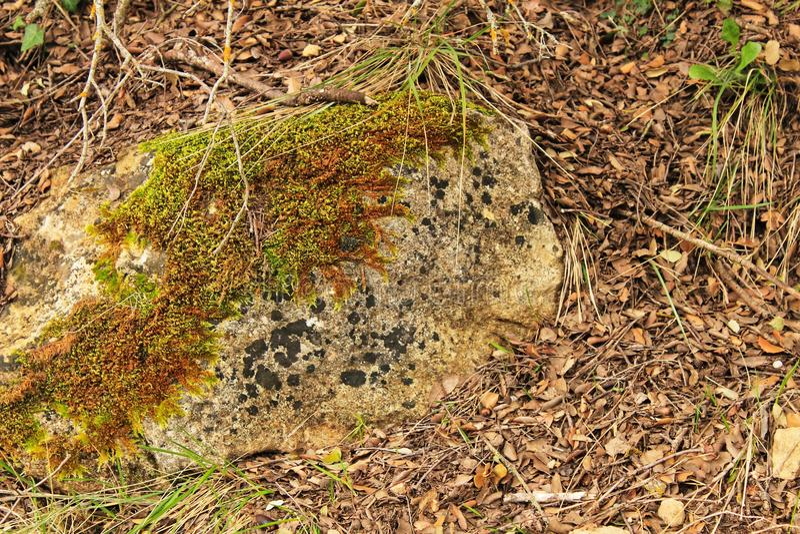Textura colorida do musgo na pedra cinzenta fotografia de stock royalty free