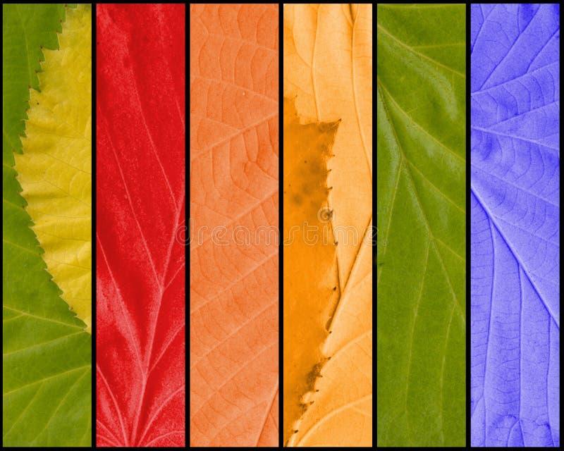 Textura colorido das folhas ilustração royalty free