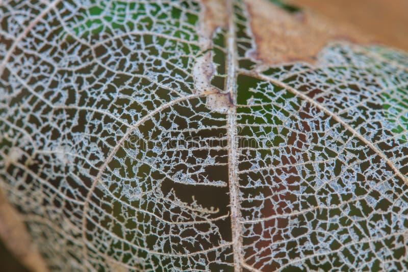 Textura com as folhas podres com fibras fotos de stock