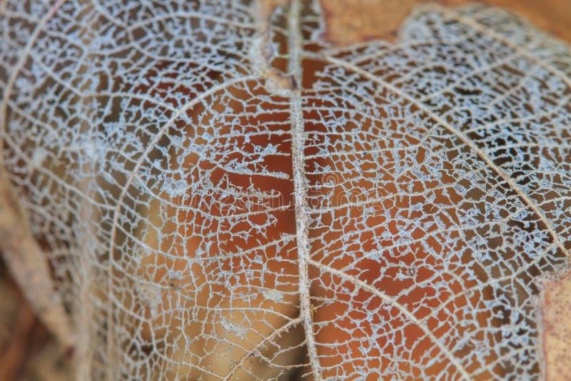 Textura com as folhas podres com fibras foto de stock