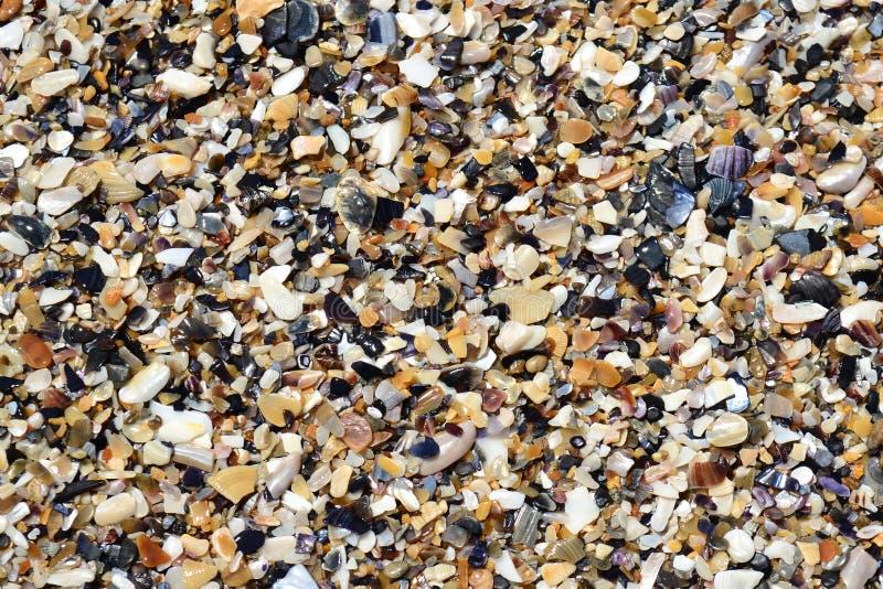 Textura con las conchas marinas foto de archivo