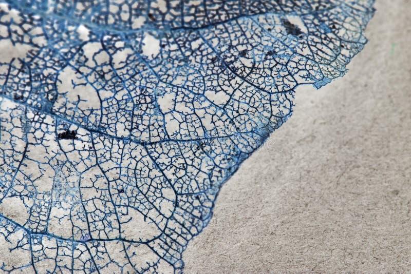 Textura con las hojas putrefactas con las fibras imagen de archivo