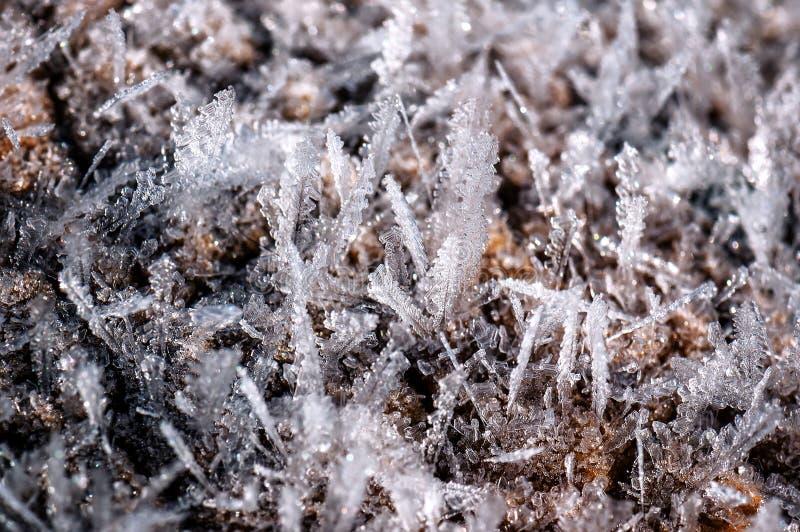 Textura congelada das folhas de gelo foto de stock royalty free