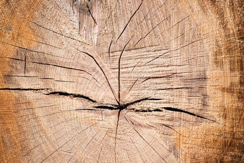 Textura cortada de madeira, close up imagens de stock