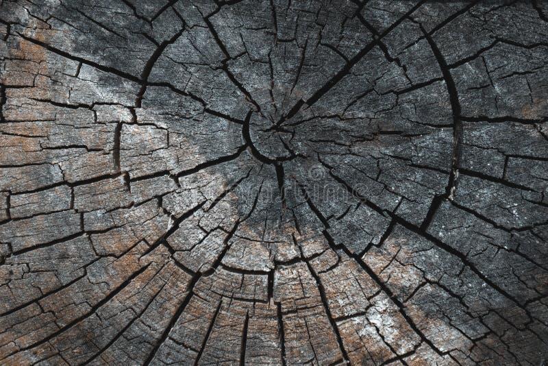 Textura cortada de madeira marrom cinzenta velha Fim escuro do fundo do Grunge acima Textura detalhada de uma seção rachada de um fotos de stock