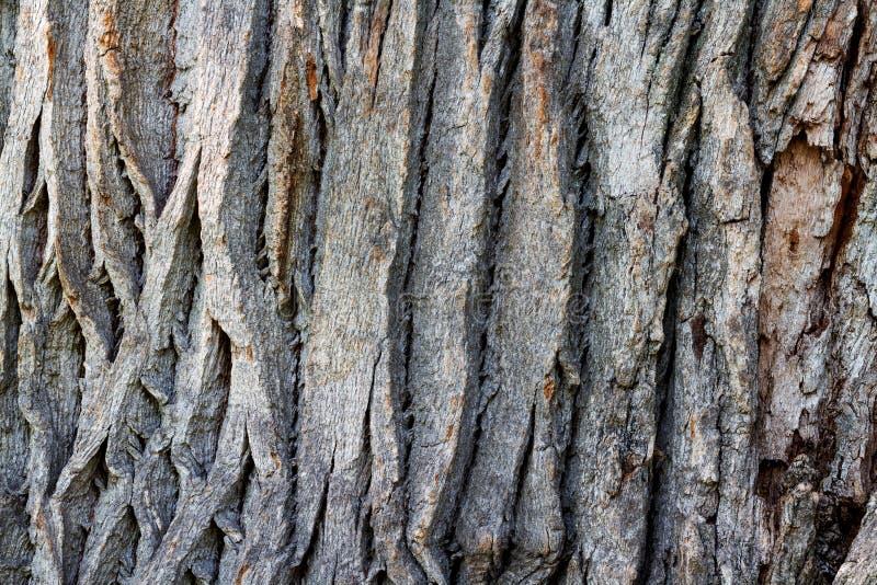 Textura criativa do relevo de uma casca velha do carvalho Textura gravada de fotografia de stock