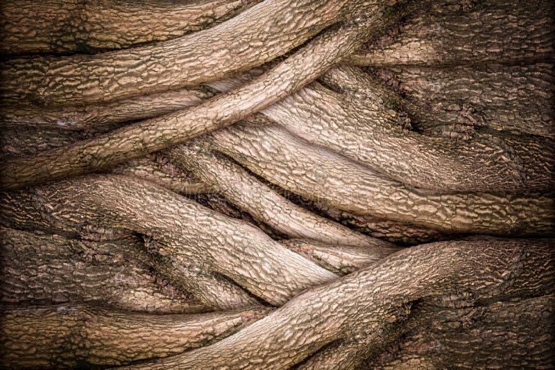 Textura da árvore e da casca fotografia de stock royalty free