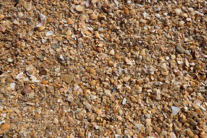 Textura da areia e das conchas do mar Fundo da natureza fotografia de stock